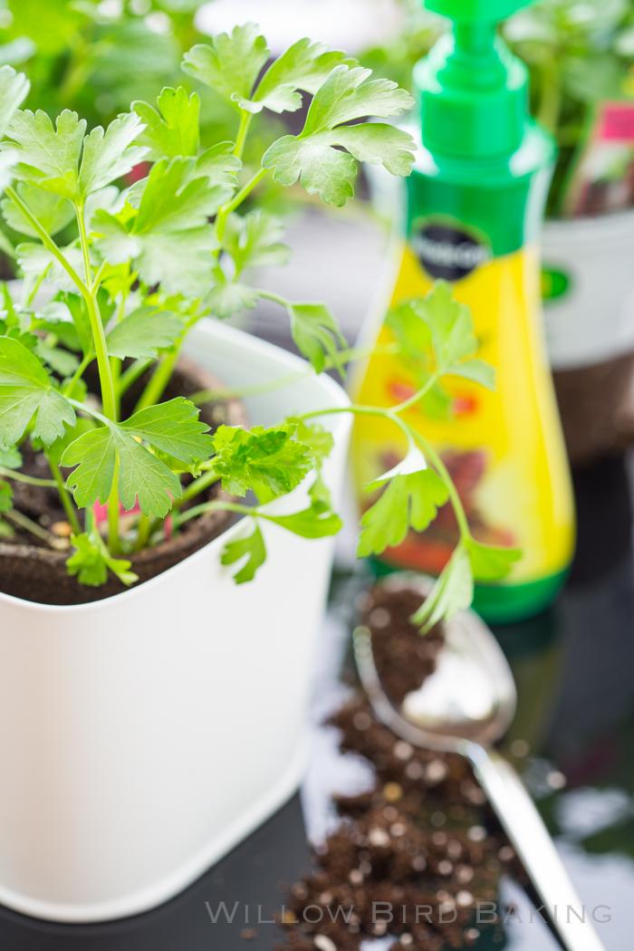 How to Create a Cute Edible Garden in a Tiny Studio Apartment