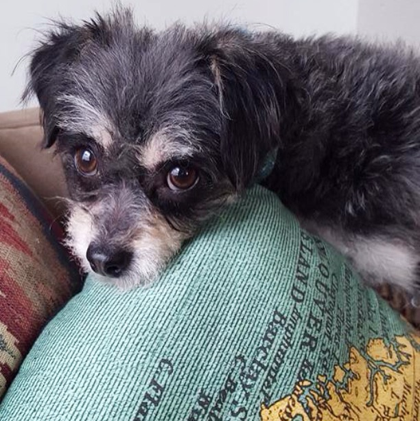 Adopt rescue dogs!